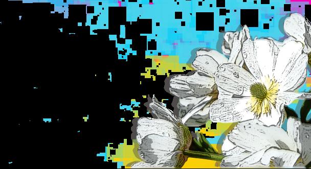 Flowers 9fceb20c80740d8d5f36abc7a4711f99f2d5e8bd192676c80a972477c756d8e6