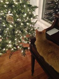 Christmas Tree & Samson