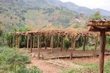Kiziba Garden