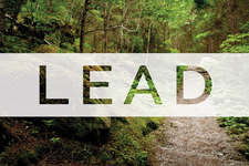 Lead 800